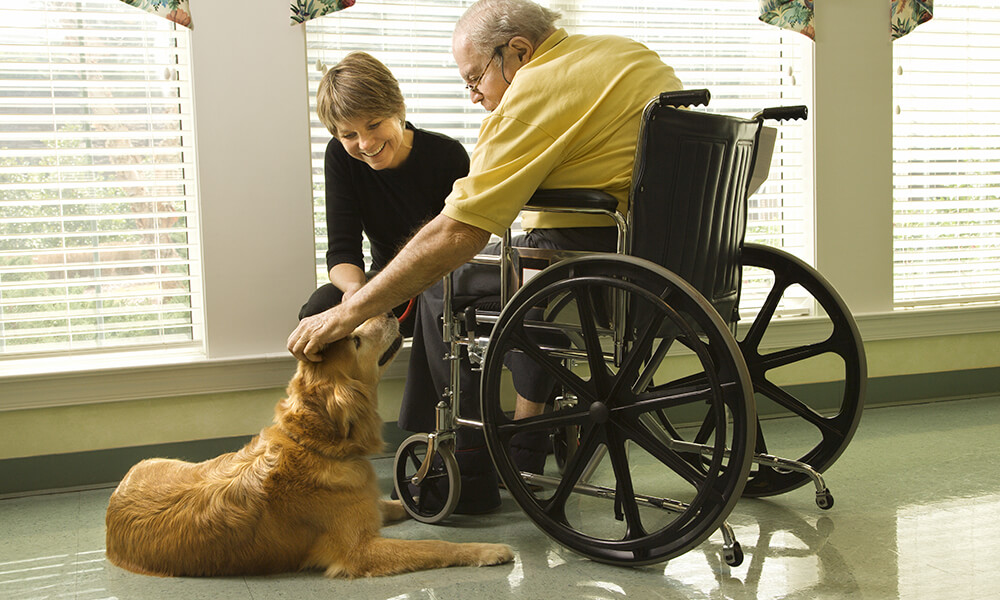 hospice care pet therapy